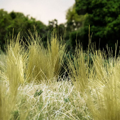 Create tufts of Static Grass or Field Grass