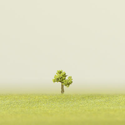 50mm light green deciduous model tree