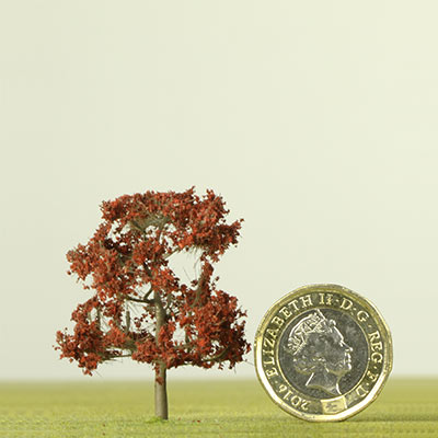 42mm Copper Beech tree