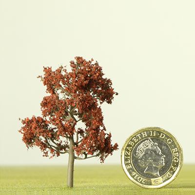 50mm Copper Beech tree