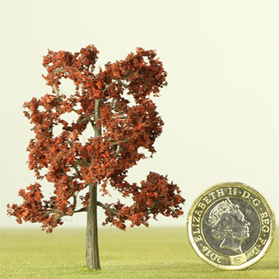 60mm Copper Beech tree