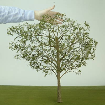 600mm deciduous model tree