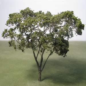 Maple species model trees