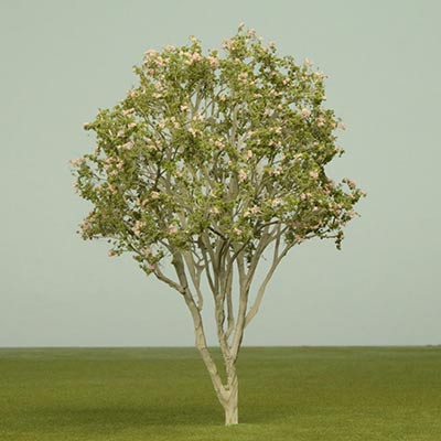 Model California buckeye Tree