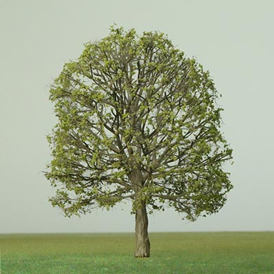 Model Horse Chestnut tree