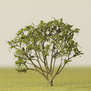 Model June Berry tree