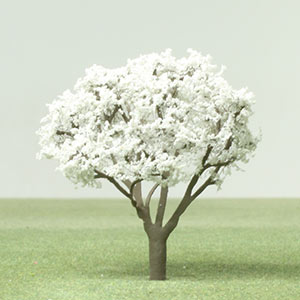 Model Serviceberry tree