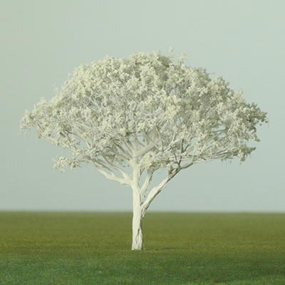 Model Royal Poinciana
