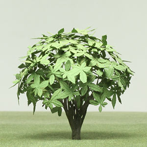 Model Japonica tree