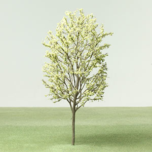 Model Maidenhair tree