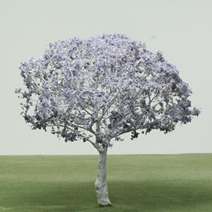 Model Jacaranda trees
