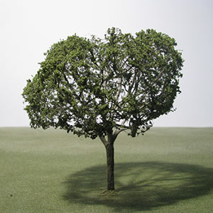 Model Walnut trees