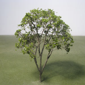 Model Crape Mirtle trees