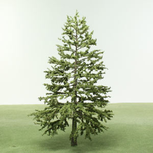 Model Conifer trees