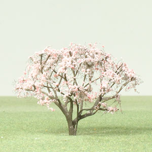 Real Magnolia tree