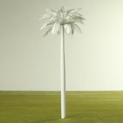 1:50 white palm tree