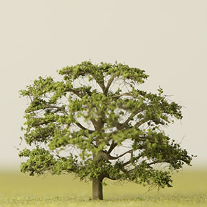 Model Persian ironwood tree