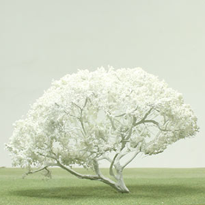 Model Frangipani tree