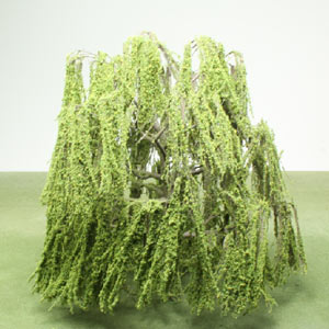 Model Weeping Willow