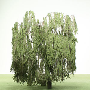 Model Willow trees