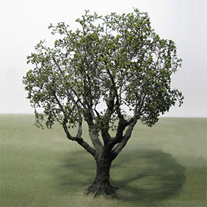 Non specific species model trees