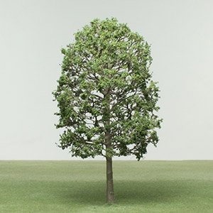 Model Whitebeam Tree