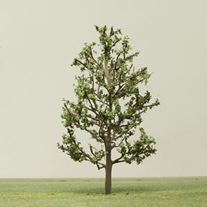 Model Small leafed lime tree
