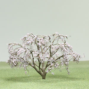 Wisteria species model trees
