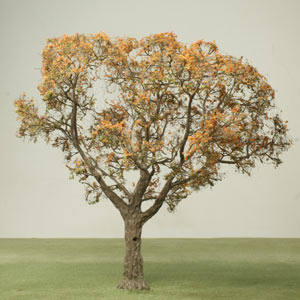 Model tree in Autumn foliage