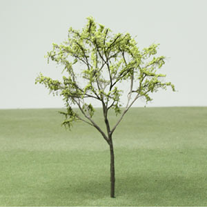 Model tree in Spring foliage