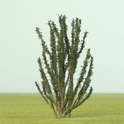 75mm shrub
