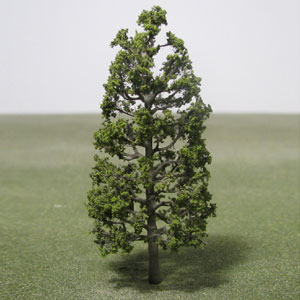 Magnolia species model trees