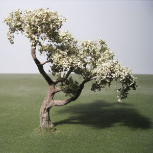 Olive species model trees