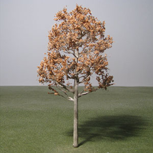 Rowan species model trees